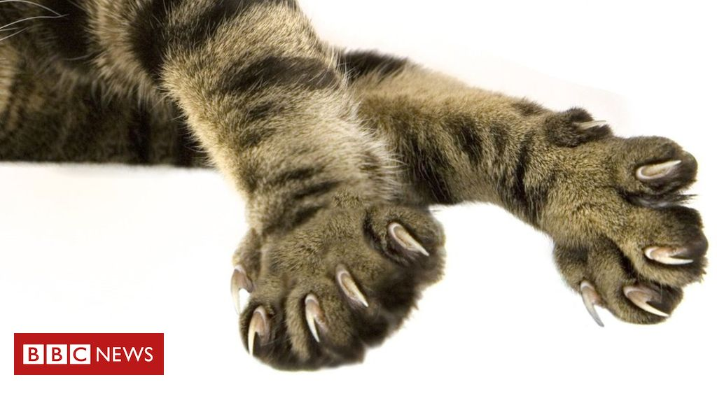 Cat declawing: Should it be banned, and why does it happen in the US?