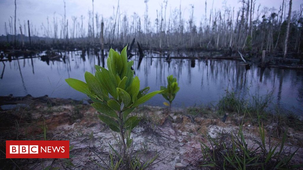 Plant extinction 'bad news for all species'