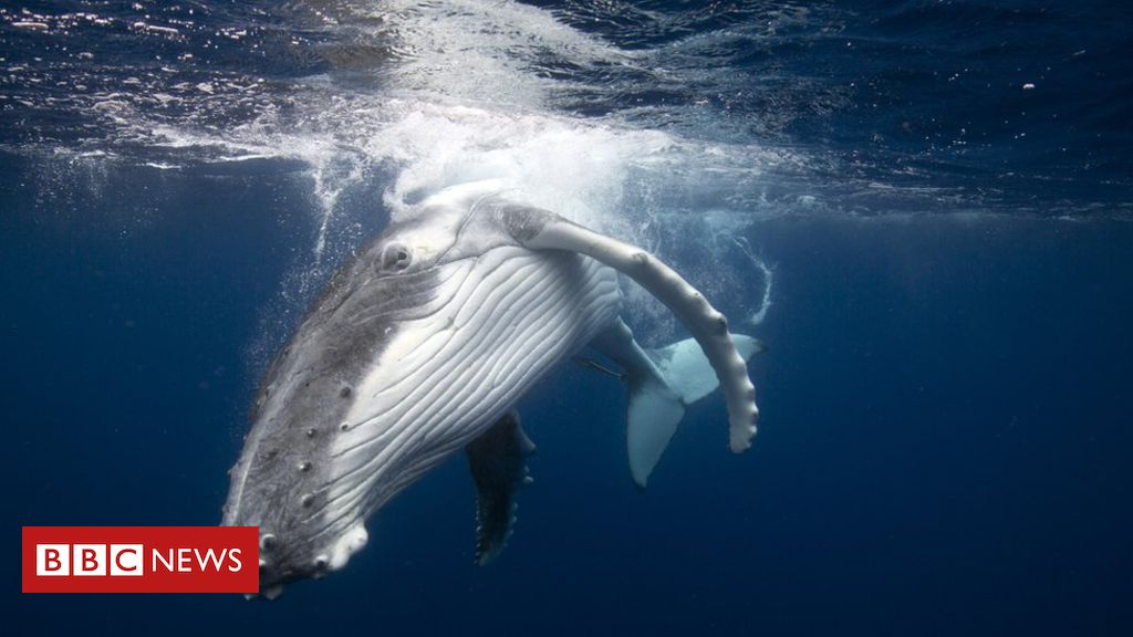 Japan whaling: Commercial hunts to resume despite outcry