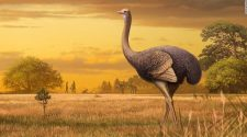 Giant half-ton bird nearly 12 feet tall living alongside ancient Europeans
