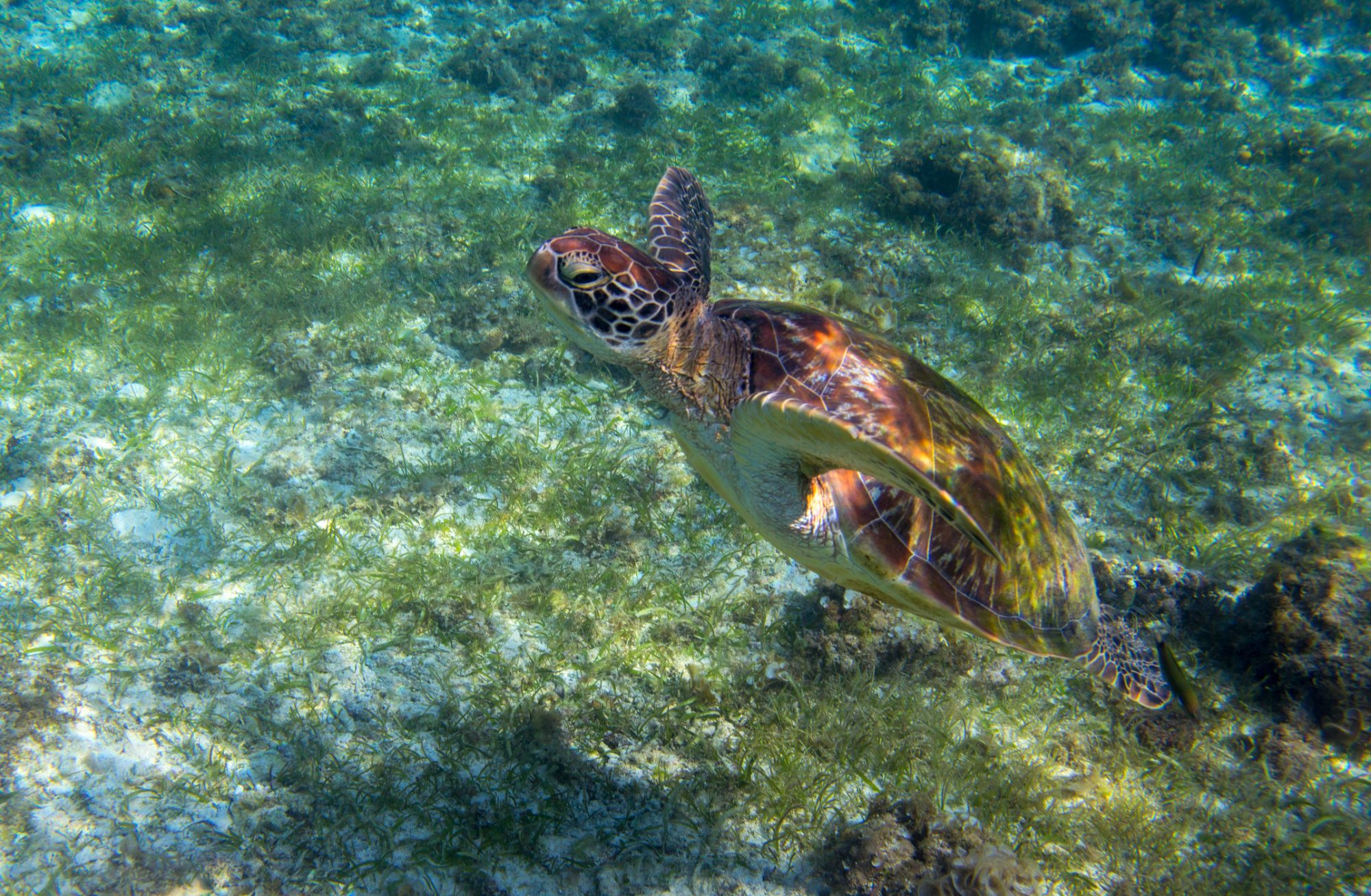 Can innovation and new technology tackle environmental issues in the marine environment?