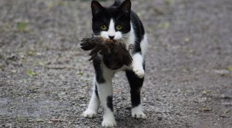 New technology could stop cats bringing dead animal 'gifts' to owners after hunts