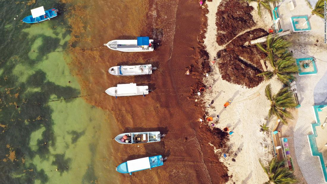 Aerial view of residents removing Sargassum in Puerto Morelos, Quintana Roo state, Mexico, on May 15, 2019.