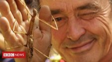 Obituary: Georges Brossard, the man who stuck up for insects