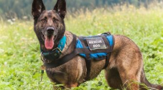 Israeli Scientist Invents Silent Dog Training Method Using Remote Control Technology -