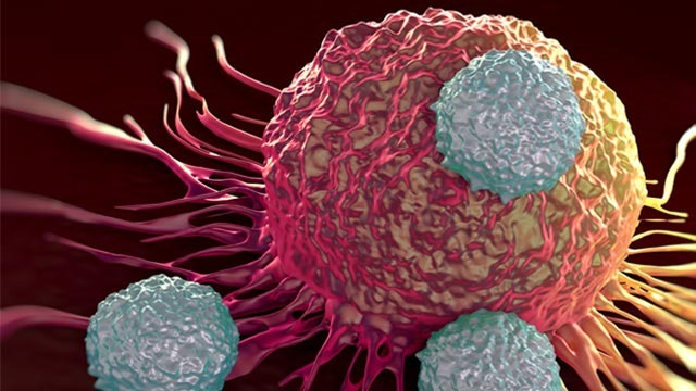 Bacteria Act as Trojan Horse to Deliver Cancer Immunotherapy