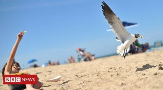Staring at seagulls helps protect food, say scientists