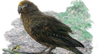 Giant Parrot Fossil Shows Creature That Weighed About 15 Pounds : NPR