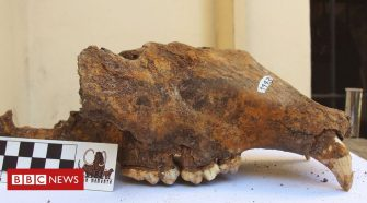 Extinction: Humans played big role in demise of the cave bear