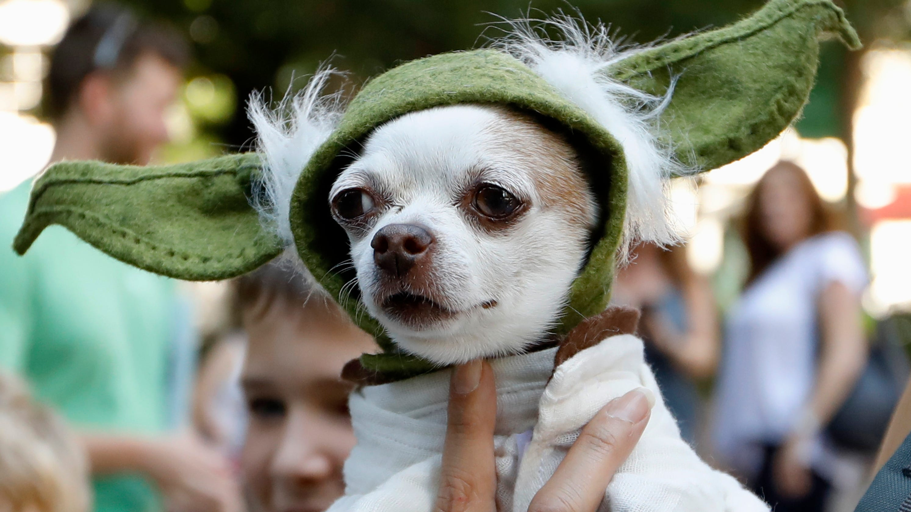 Pets costumed as Yoda, Starbucks turn out in Atlanta