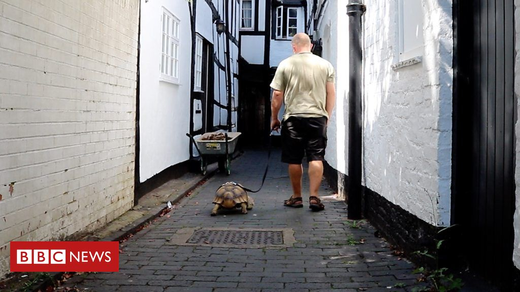 Gloucestershire man walks tortoise to the pub every day