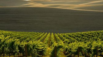 Is Washington The Most Underrated Wine Region In The World?