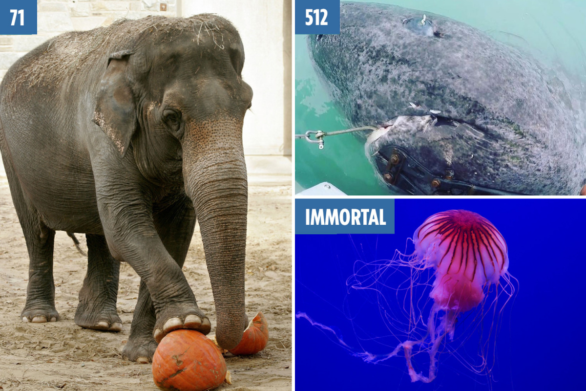 The world's oldest animals from the 500-year-old shark born before Shakespeare to the jellyfish that can live FOREVER – The Sun