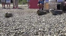 Seals nursed back to health and released into ocean