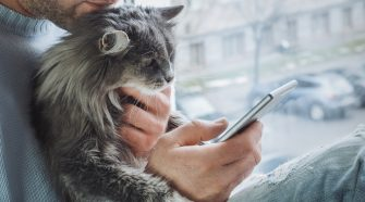 Why the Pet Technology Boom is a Precursor to IoT