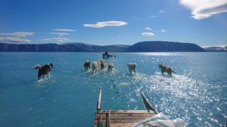 Climate scientist Steffen Olsen took this picture while travelling across melted sea ice in north-west Greenland