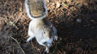 Squirrels Eavesdrop On Birds To See If It's Safe To Come Out : NPR