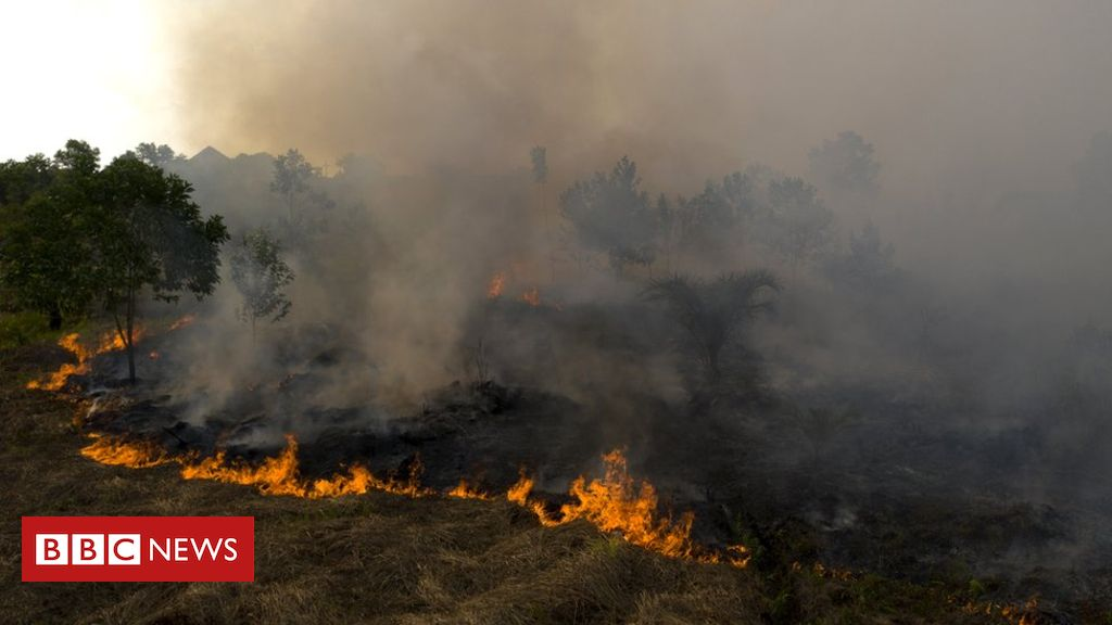 Indonesia haze: Why do forests keep burning?