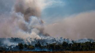 Plumes of smoke rising from the rainforest canopy in the Amazon