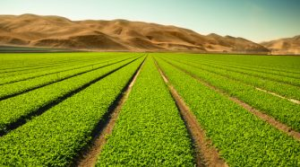 Terramera raises $45 million for its technology to reduce the use of chemicals in agriculture – TechCrunch