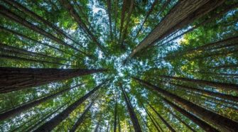 BBC - Future - What would happen if all the world's trees disappeared?