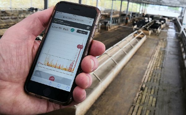 Holy cow! Dairy herd tests new wireless technology
