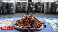 Global wildlife trade higher than was thought