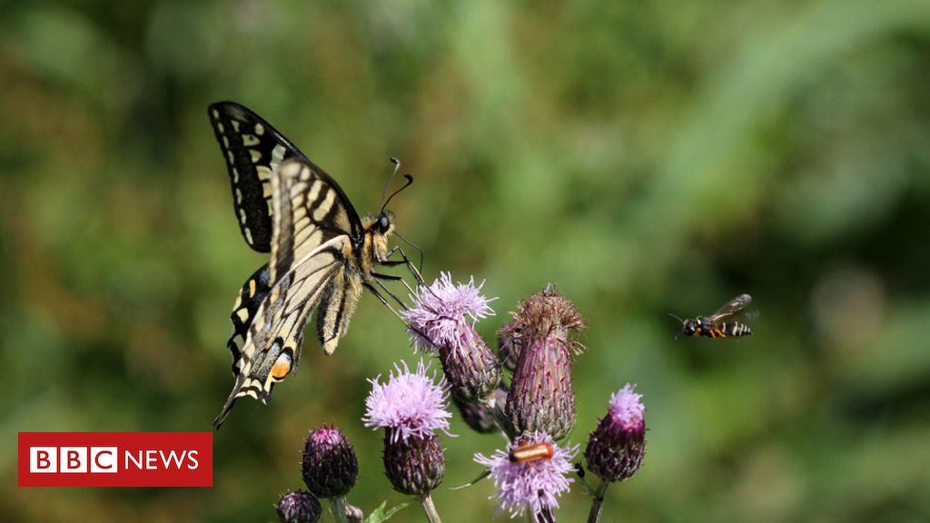 Butterflies, birds and zebras: The magic of animal motion