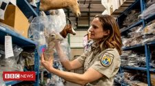 National Wildlife Property Repository: The people who take care of dead animals