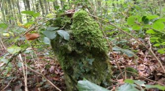 Bronze Age monument discovered in Forest of Dean