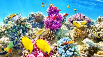 How to save the world's coral reefs