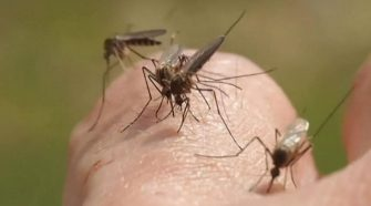 Indiana resident dies of mosquito-borne EEE in first human case in more than 20 years: health officials
