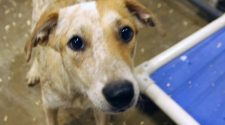 FINDING ROVER: Technology helping connect pet owners to lost animals   KETK   FOX51