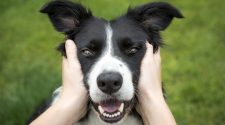 Dog People Rejoice: Owning A Pup Is Good For Your Cardiovascular Health : Shots