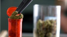 First Medical Cannabis Graduate Program Offered In Maryland : Shots