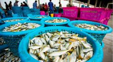 How technology can help transform the fishing industry