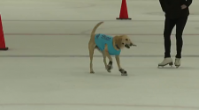 World famous skating dog performs at Garfield Heights ice rink