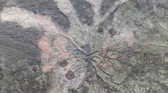 World's oldest fossil trees discovered in New York