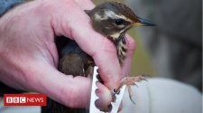Why I spend my weekends ringing birds