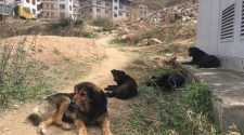 Bhutan looks to technology to control dog population
