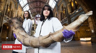Natural History Museum will showcase 'fantastic beasts'