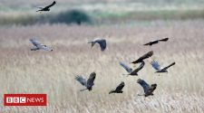 Sizewell: RSPB Minsmere nature reserve fears 'environmental impact' on wildlife