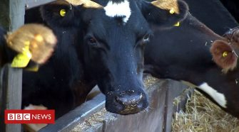 Cut meat and dairy intake 'by a fifth', report urges
