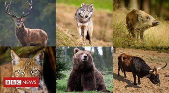 Wales a haven for wildlife - but for how long?