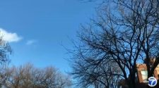Chicago Water Dept. tests tree-saving technology in Andersonville