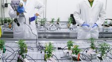 Can technology transform the global cannabis industry? — Quartz
