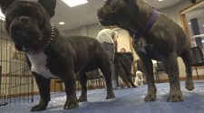 School of Mines and Technology hosts their wellness fair: therapy dogs included