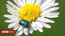 Top 10 garden pests and diseases revealed
