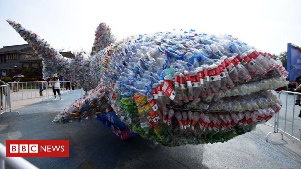 Plastic: How to predict threats to animals in oceans and rivers