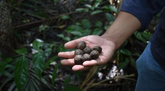 Project aims to save the Amazon with technology